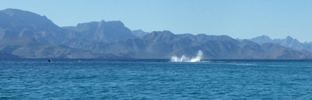 delfinspring